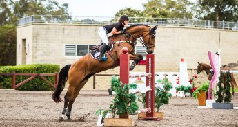 Eventing horses for sale